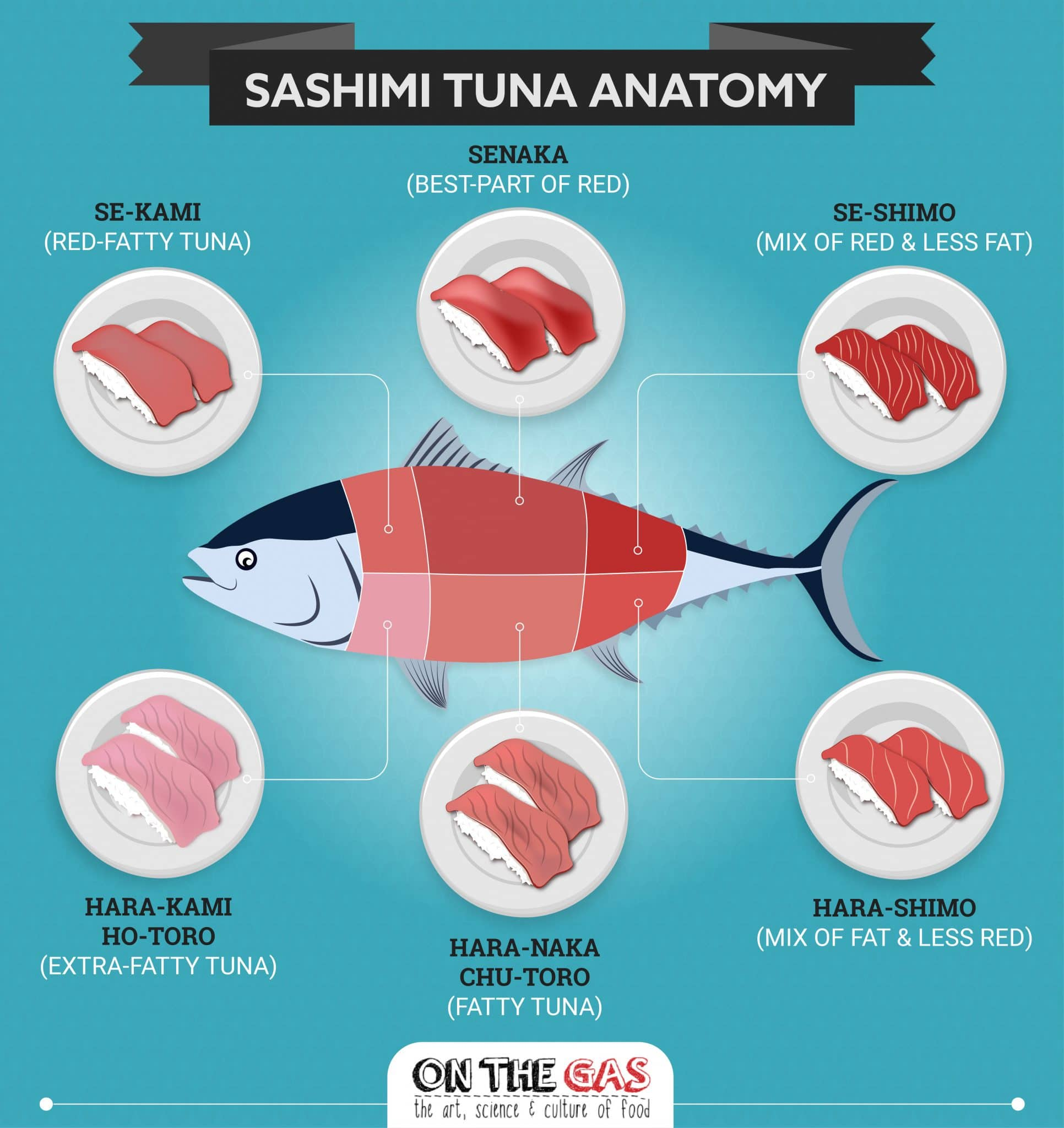 What is Maguro – Otoro, Chutoro and Akami explained