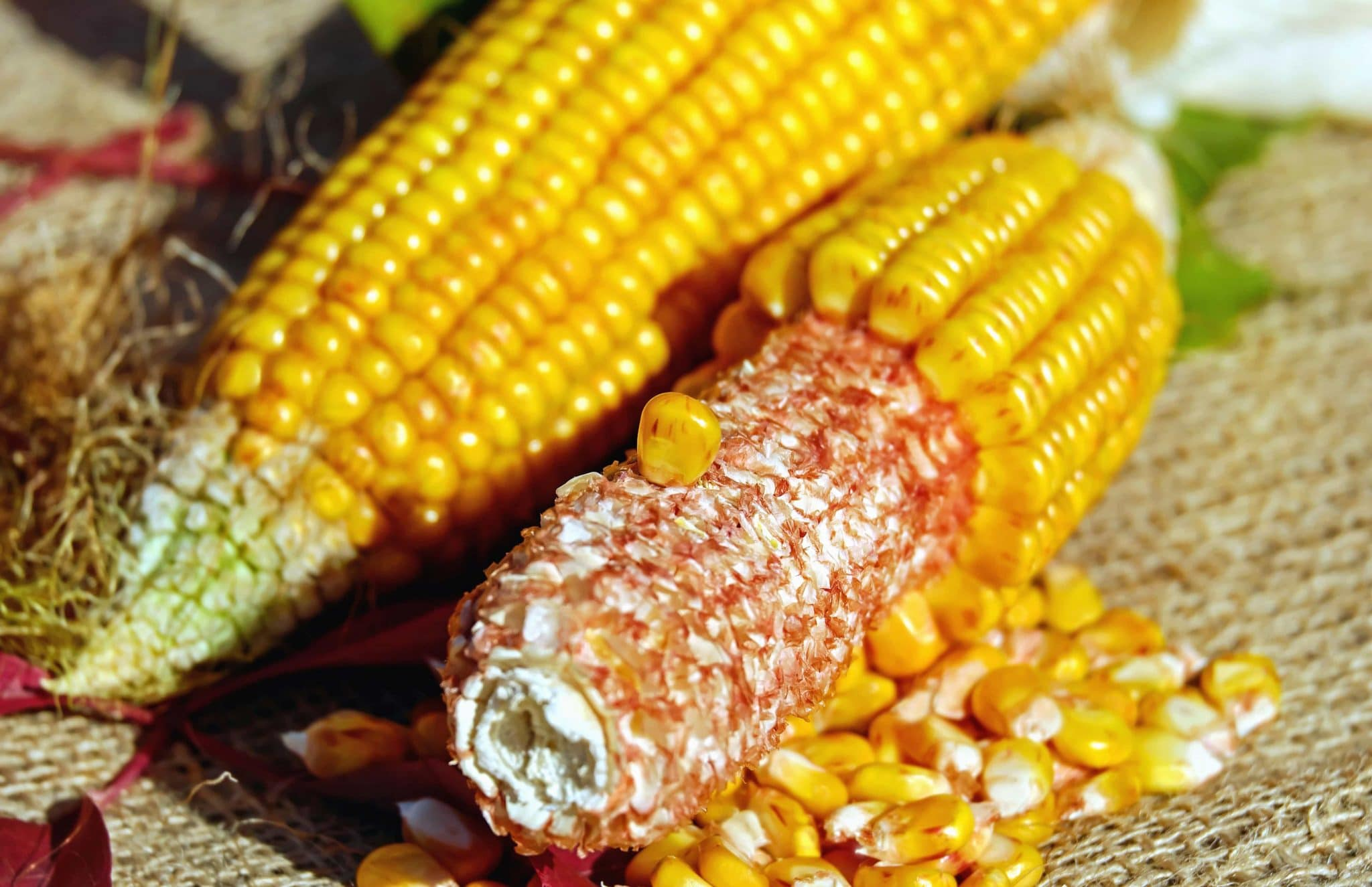 corn kernels, recipe with corn kernels