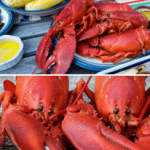 Maine Lobster vs Canadian Lobster: A Comprehensive Review