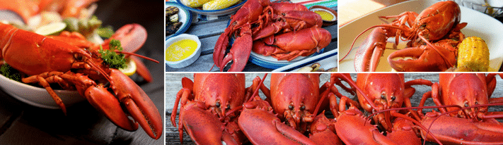 maine lobster vs canadian lobster, what are lobsters, best kind of lobster