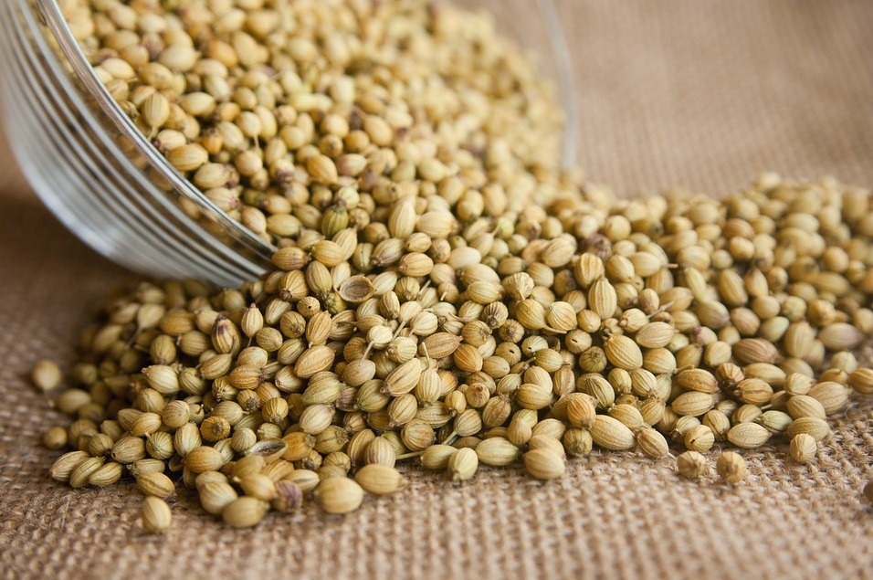 coriander, what is coriander, coriander spice