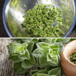 Marjoram Substitute Ideas: Top Tricks For Saving Your Recipe