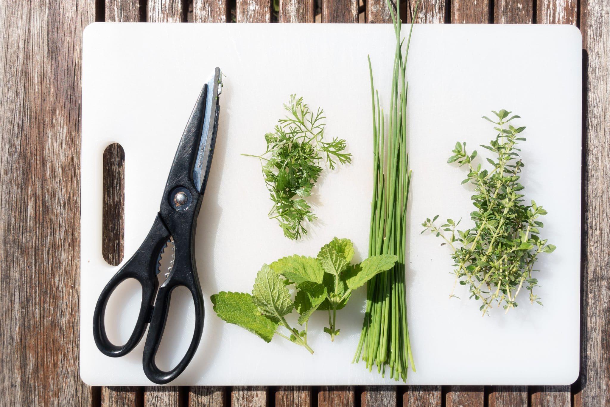 kitchen scissors, scissors for kitchen