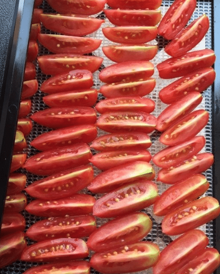 tomato dryer, tomato dryer machine