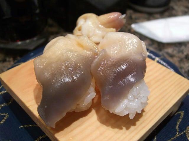 sea snail types, sea snail species