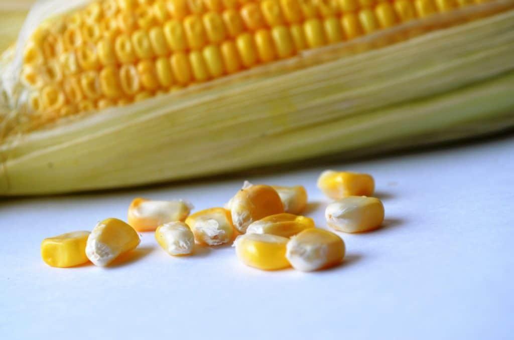 maize kernels, whole maize kernels