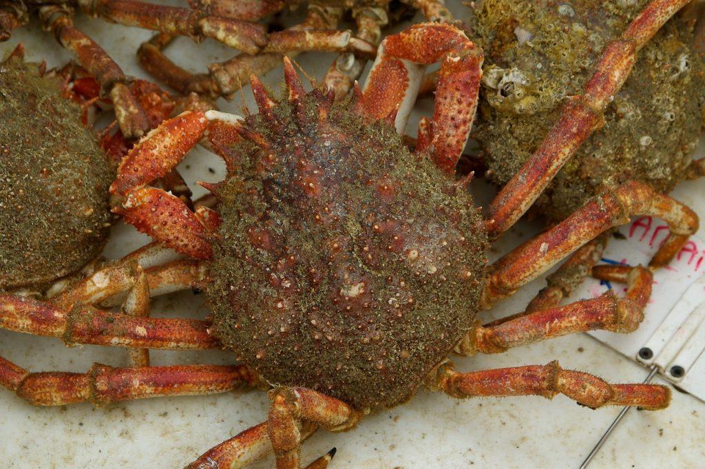 toxic seafood, toxic crab