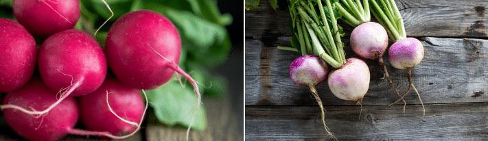 turnip vs radish, what are turnips, what is radish