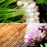 Leeks vs. Scallions vs. Chives Vs. Onion - Let's Know the Differences and Uses